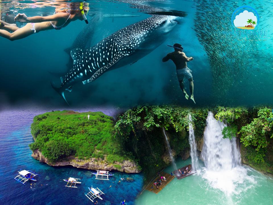 Whale Shark + Kawasan Falls + Moalboal Island Hopping